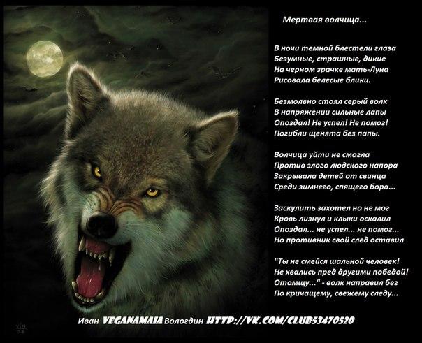 Стих про волка он отомстил без крови